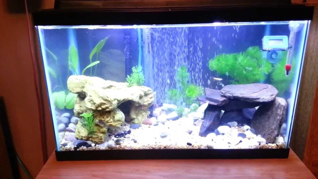 Best Aquarium Ever 10 Gallon Planted Tank Tips N Tricks Fish Tank Design Fish Tank Decorations Fresh Water Fish Tank