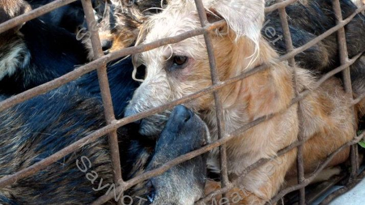 Hm Government Halt All Foreign Aid To Countries That Practise Human Consumption Of Dog And Cat Meat Dog Cat Cats Dogs