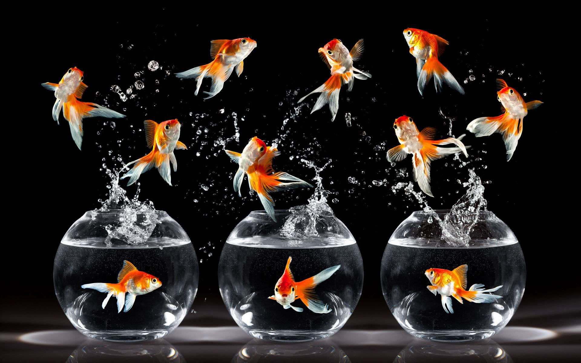 Awesome Goldfish Aquarium Wallpaper With Images Fish Wallpaper