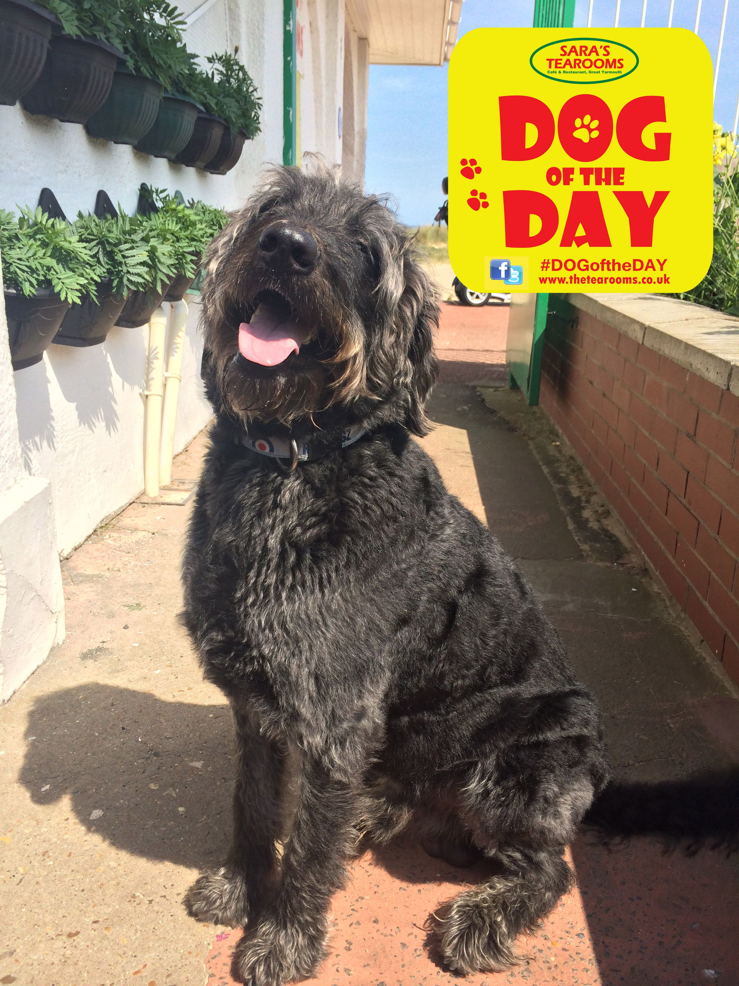 Dog of the day with images dog days dogs dog friends
