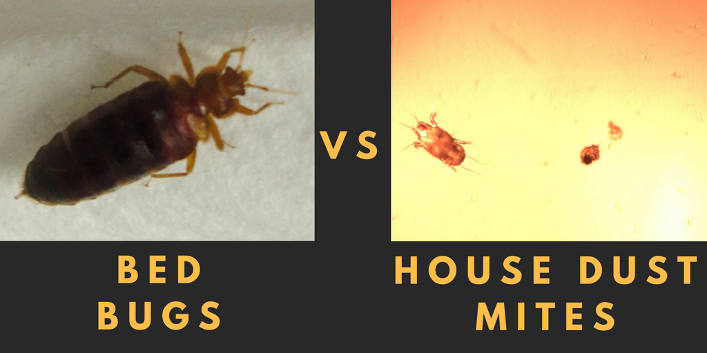 Bed Bugs House Dust Mites What S The Difference Dust Mites