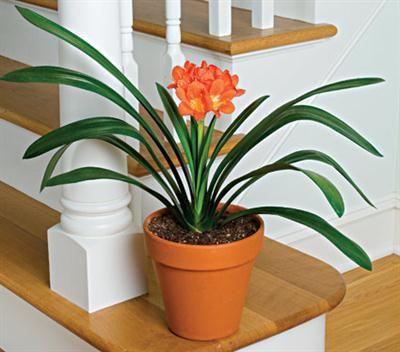 plantasinterior #ornamentales #decoraciónplantasinterior | Plantas ...