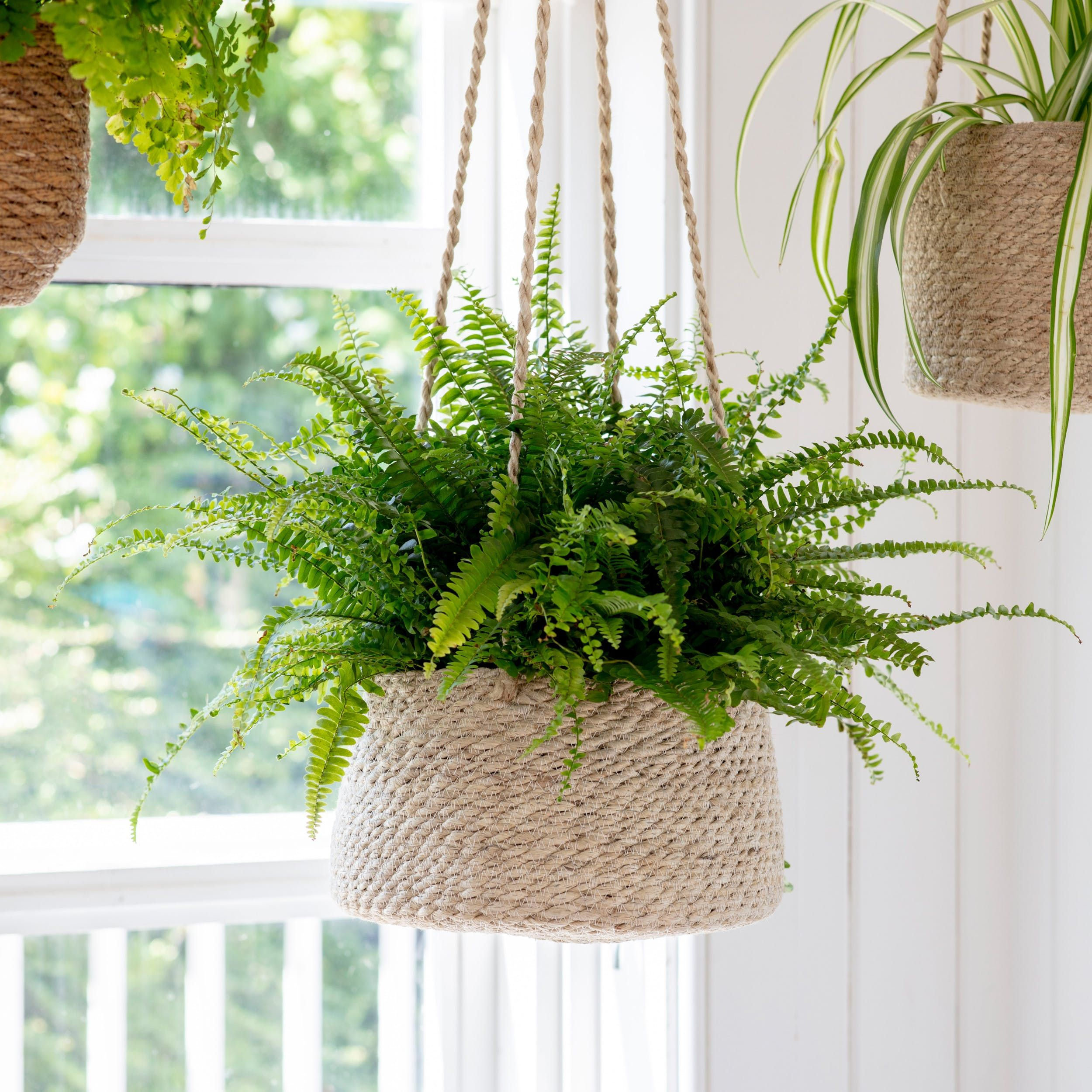 Hanging Plant Pot in 2020 (With images) Hanging potted