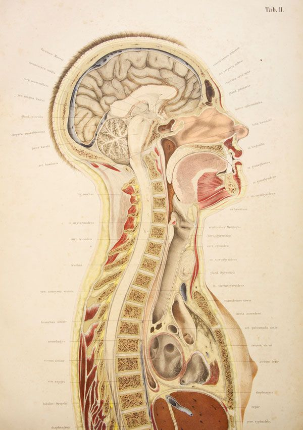 The Health of Poetry | Anatomy, Medical illustrations and Illustrators