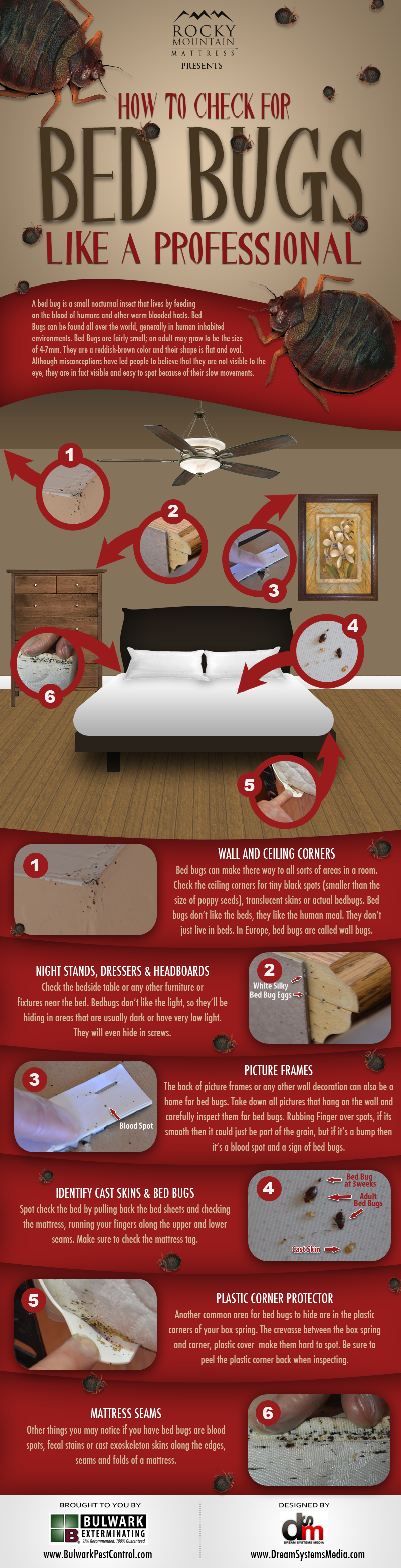 Pin By Thomas Ballantyne On Bugs And Stuff Rid Of Bed