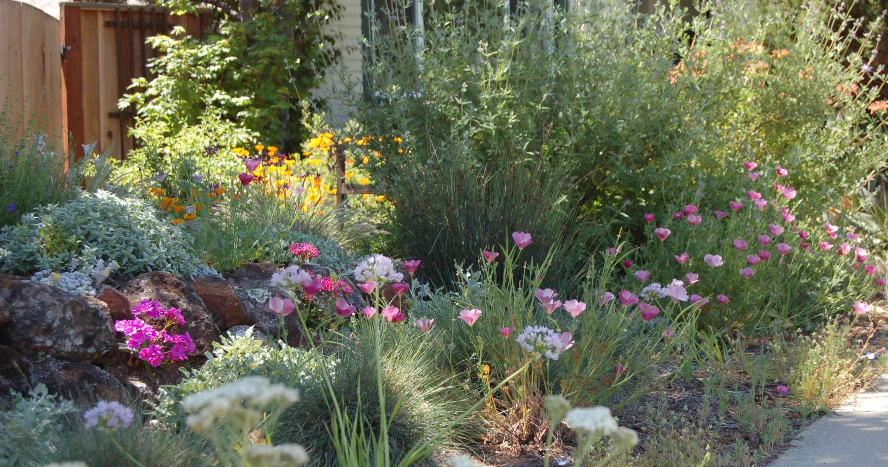 kelly marshall garden design specializing in beautiful california native low water garden designs interesting ideas for garden pinterest gardens
