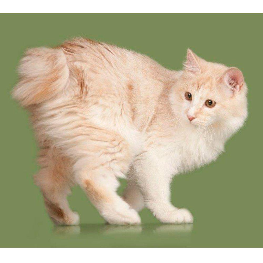 """Revista Meu Pet on Twitter: """"Evento reúne 120 gatos e feira de adoção de vira-latas → https://t.co/BFA6Imh98z #gatos Foto Divulgação/Shutterstock https://t.co/MyIV6H3Esu"""""""