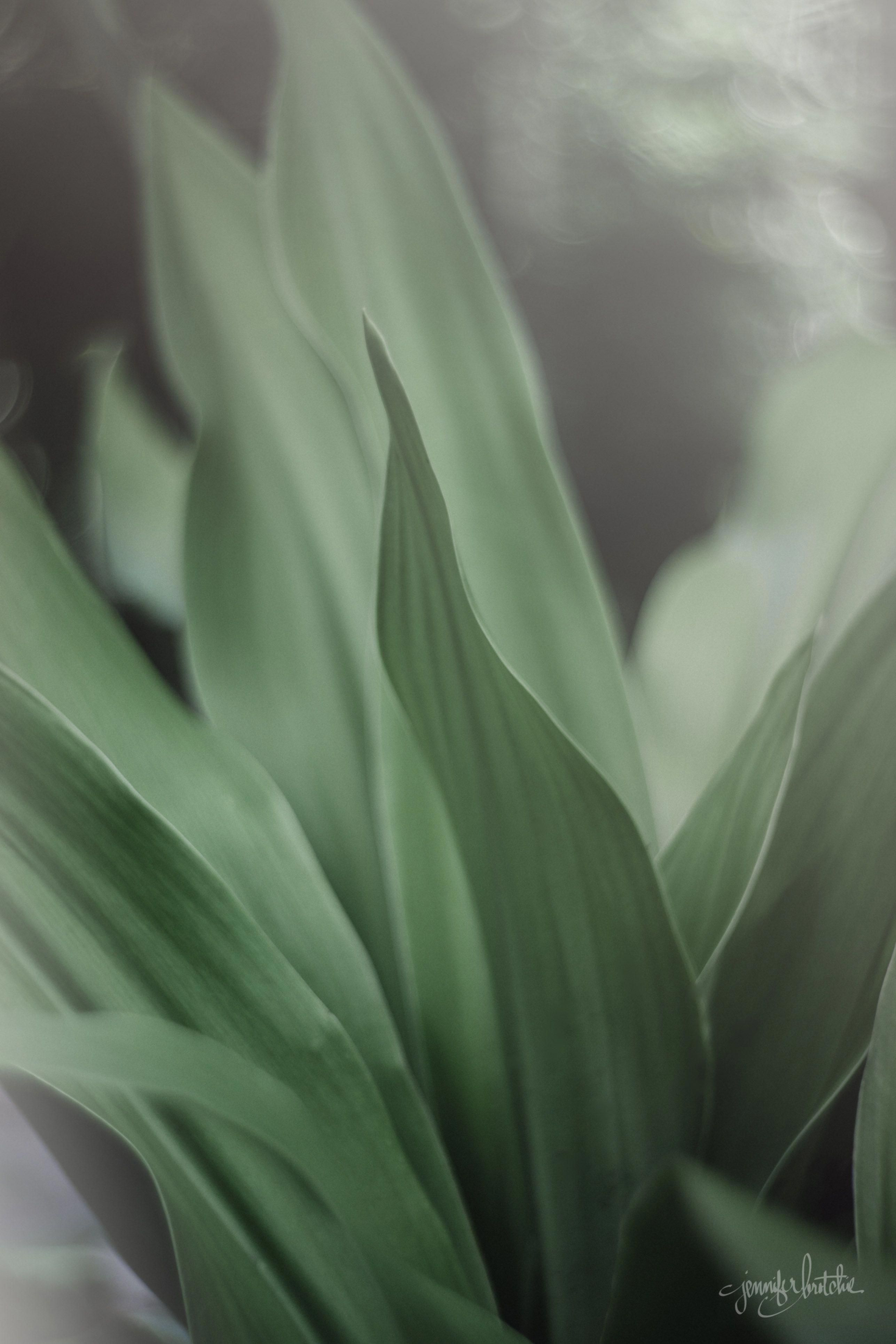 Art Photography That Truly Are Amazing Artphotography Nature Aesthetic Pastel Aesthetic Plant Aesthetic