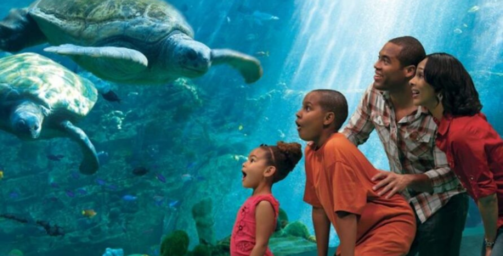 a57db08d6023c11c971a972736cd80cd - Active Duty Free Admission To Busch Gardens