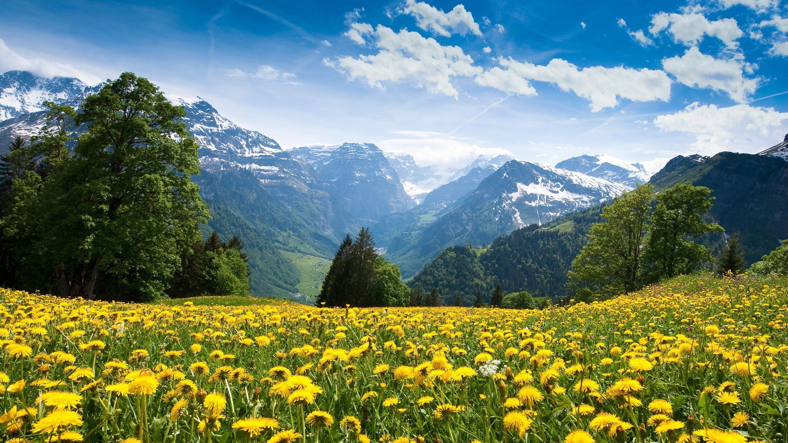 Mountains Landscape Nature Mountain Spring Meadow Flowers Wallpaper 2560x1440 653161 Scenery Wallpaper Mountain Landscape Natural Scenery