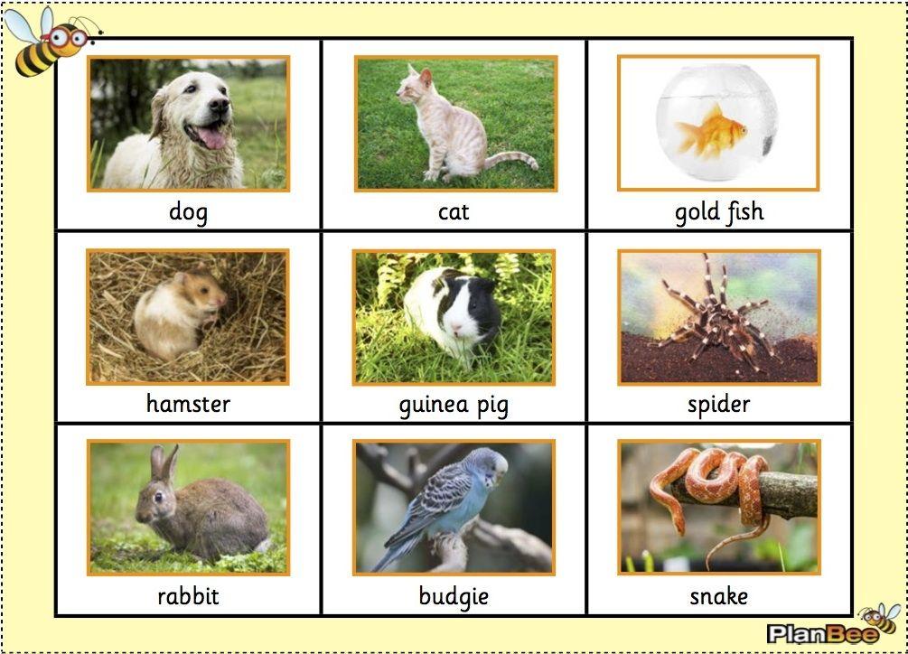 UK Animal Word Mat (With images) Word bank, Animal