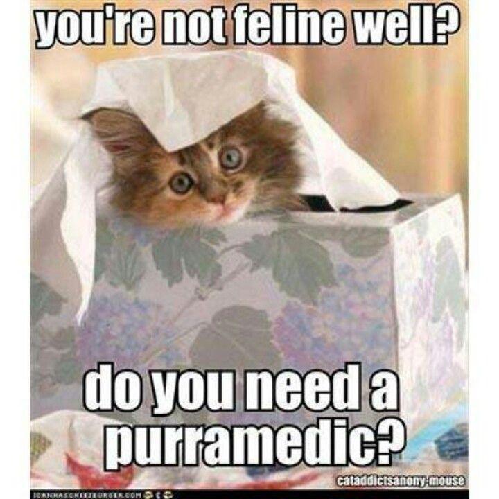 Kitty cat purramedic :)