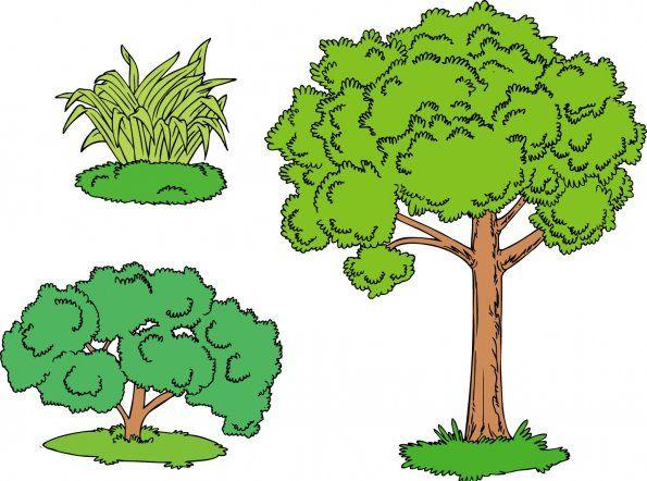Qu confusi n es un rbol una hierba o un arbusto - Arbustos con flores ...