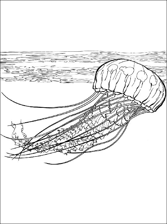 Jellyfish coloring page | Coloring pages | animals marins ...
