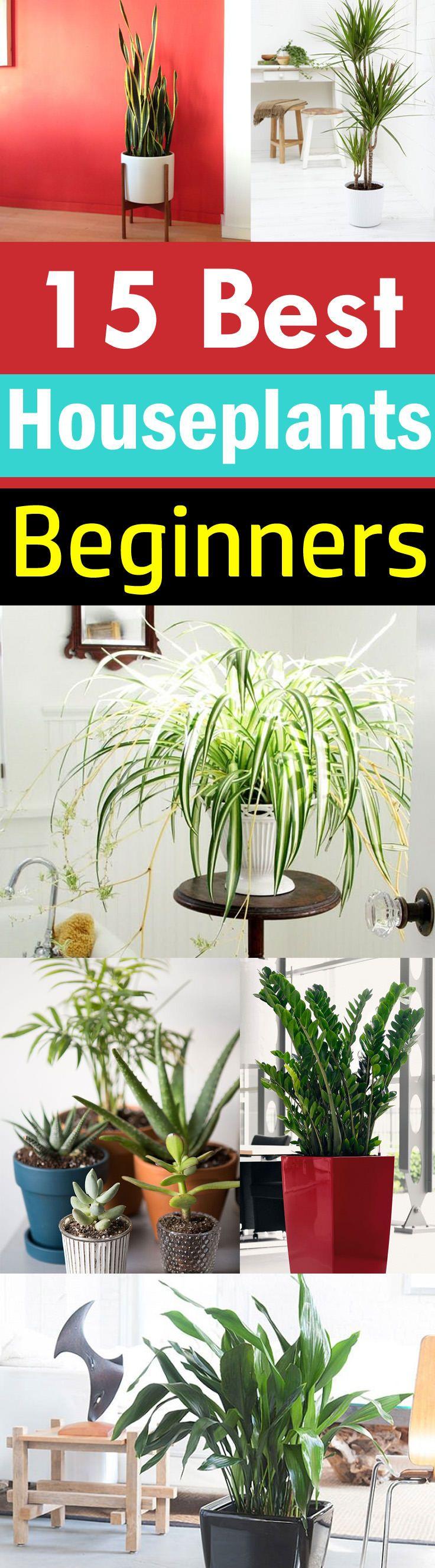 15 Best Houseplants For Beginners Backyard Plants Best 400 x 300
