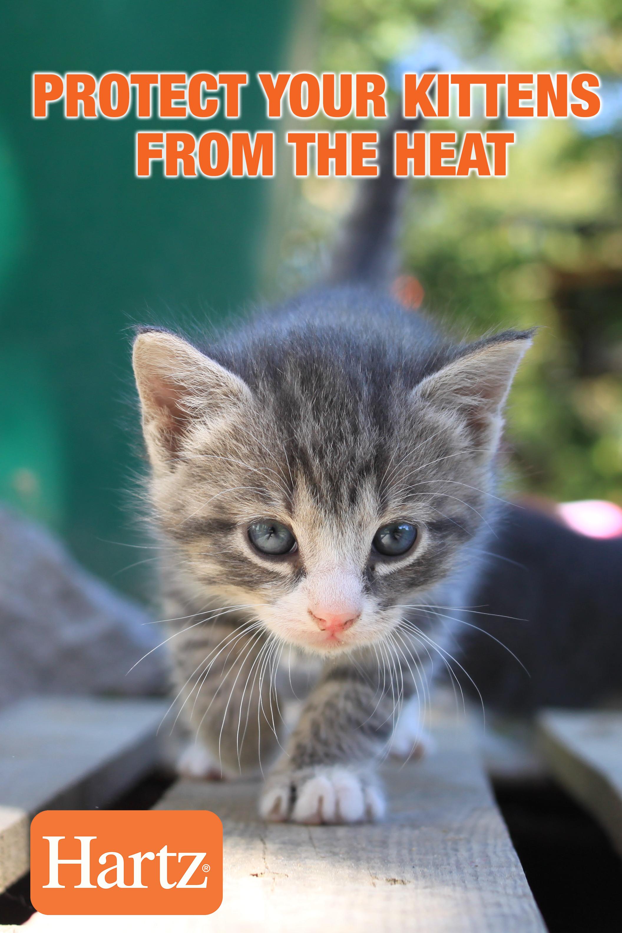 Protect Your Kittens From The Heat In 2020 Kitten Wallpaper Little Kittens Kitten
