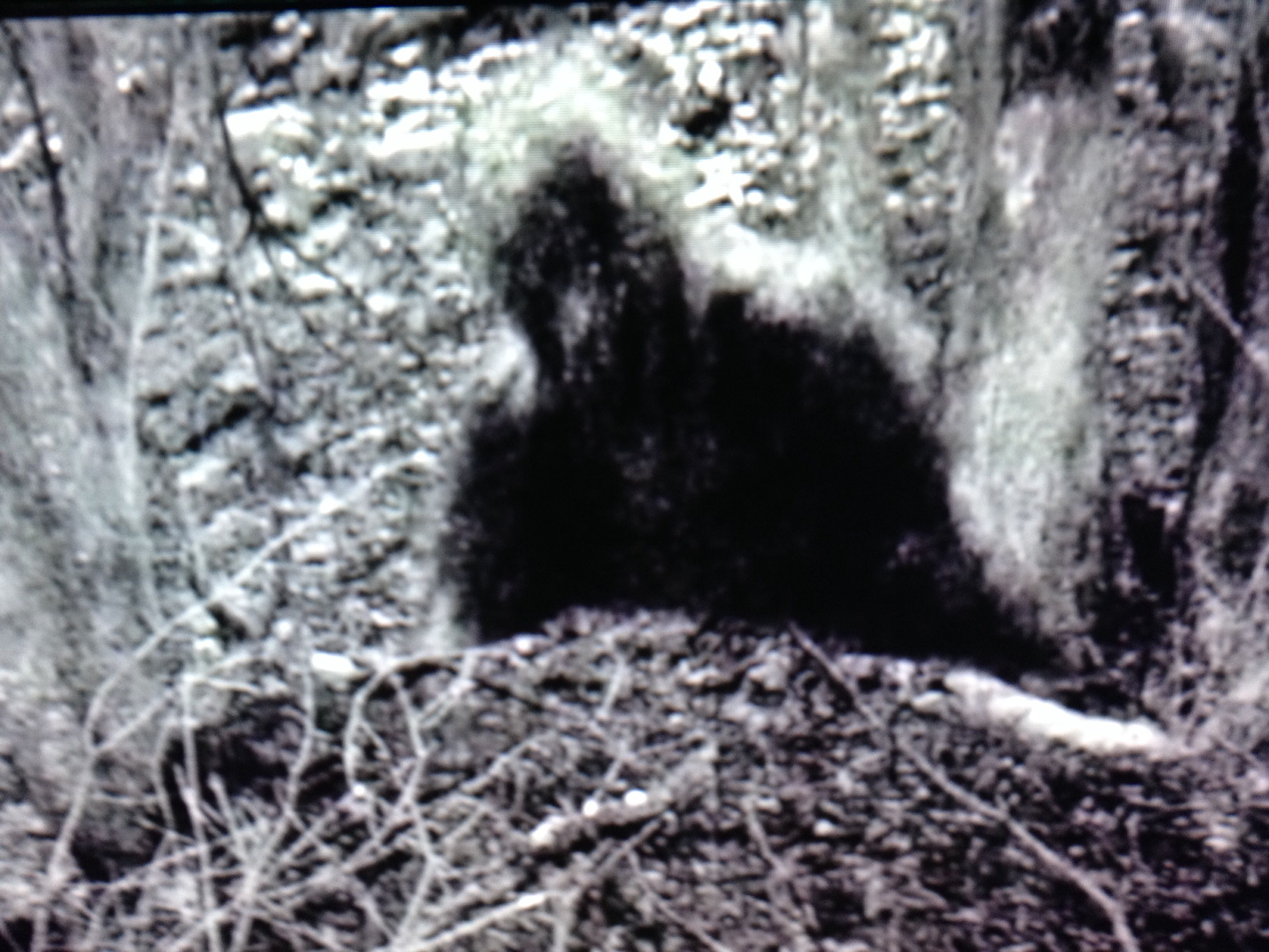 bigfoot in search of the truth North america bigfoot search is the only organization in the world with full time professional researchers that respond and investigate bigfoot sightings and incidents.