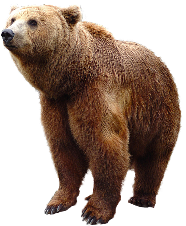 Grizzly Bear Standing Png Image Bear Stuffed Animal Bear Pictures Grizzly Bear