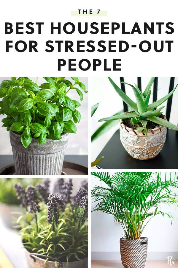 7 Stress Relieving Indoor Plants to Add to Your Ho