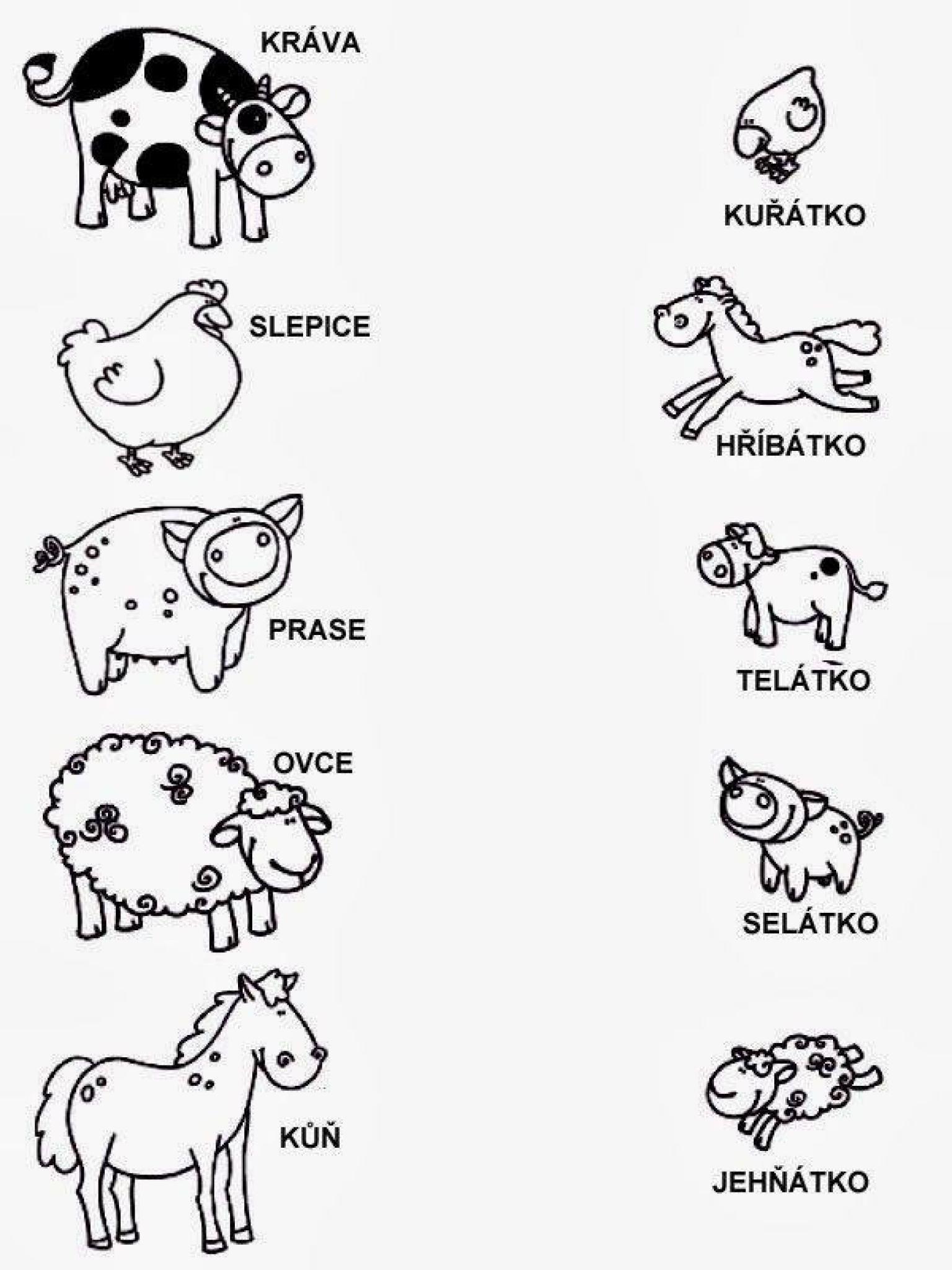 Výsledek obrázku pro zvířecí rodiny pracovní list   Škola ...