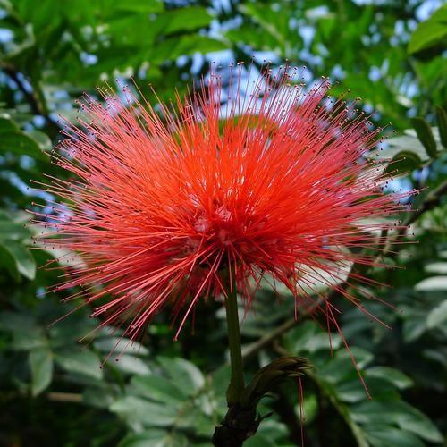 Tips Les Plantes Grimpantes A Feuillage Persistant