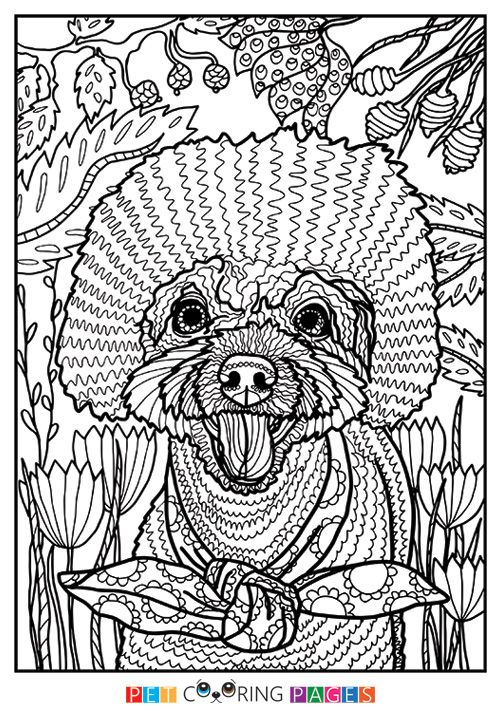 Poodle Coloring Page Milo Dog Coloring Page Horse Coloring