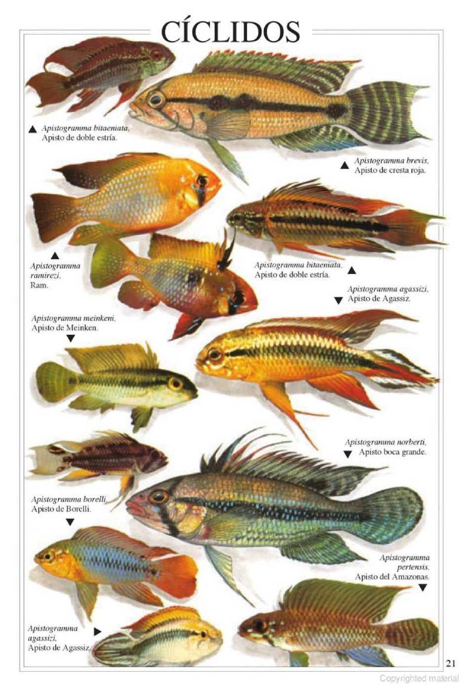 Pin Van Allan Mitchell Op Peces Comparativos Comparative Fish Vissen