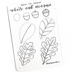 HOW TO DRAW A WHITE OAK ACORN AND LEAF! . . . For the leaf