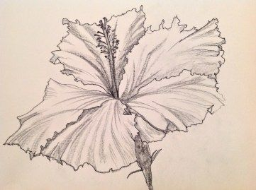 Black And White Line Drawing Flower : Lotus flowers leaves drawings illustrations creative market