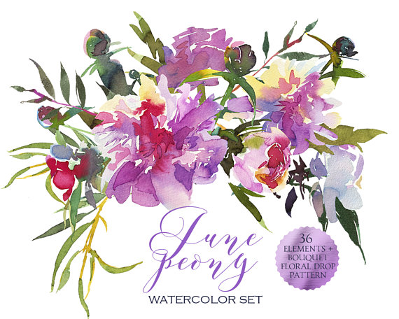 Watercolor Pink Peonies Clipart Floral Bouquets Elements Purple