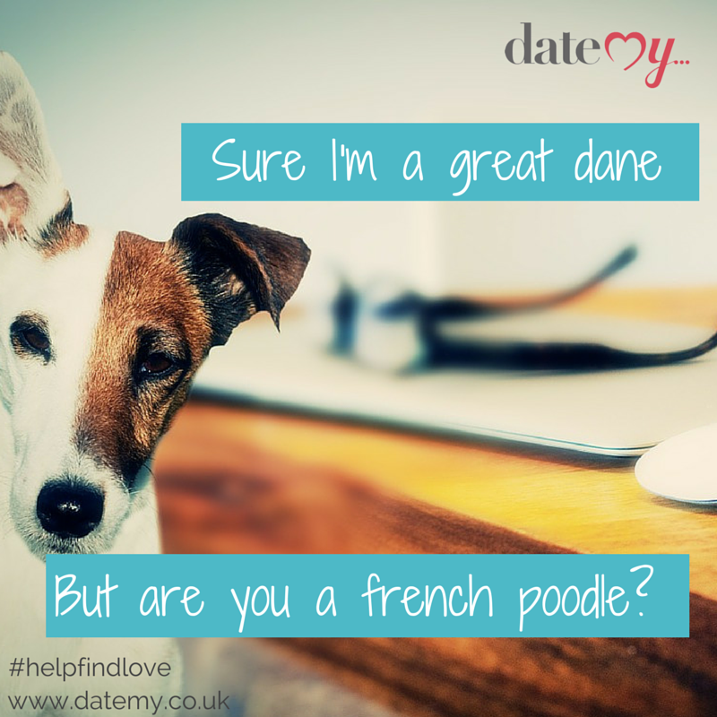 online dating for companionship dogs