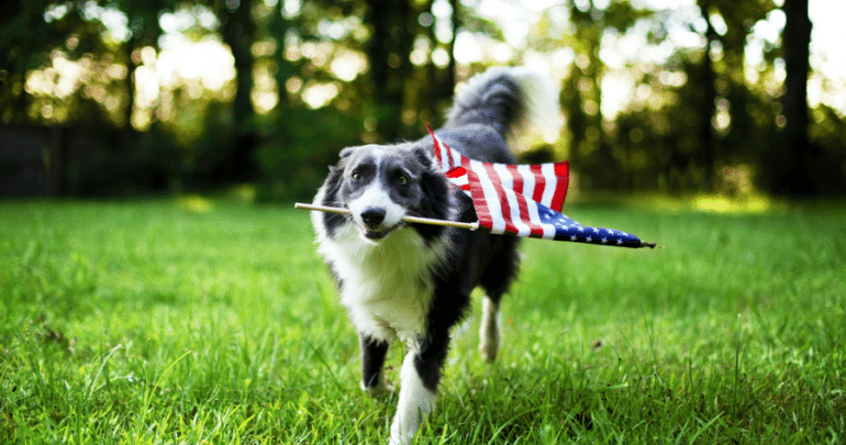 Dress Up Your Dog in Red, White, and Blue this Fourth of