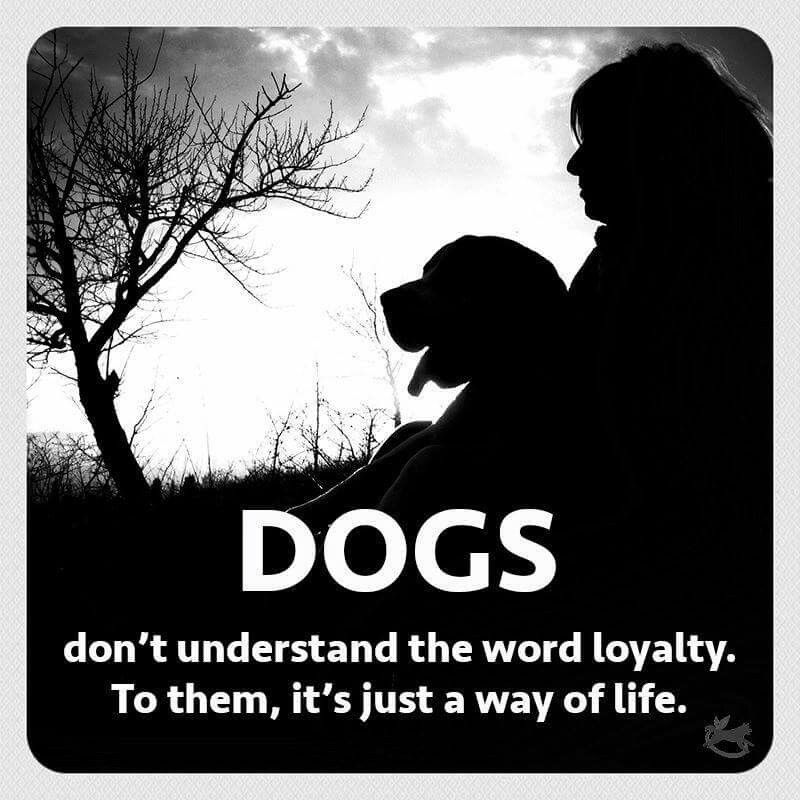 Dogs...