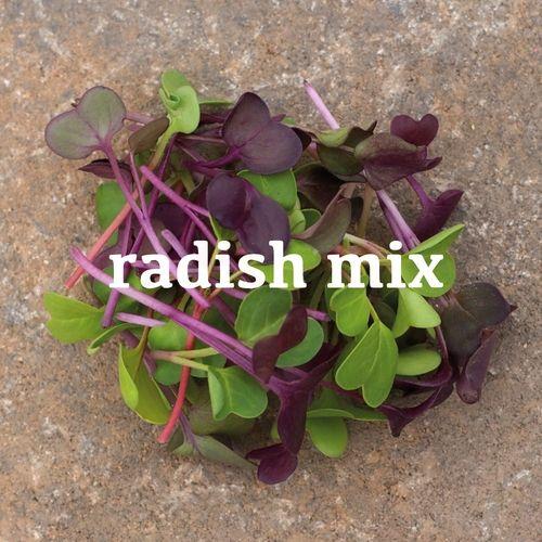 Radish Mix Microgreens Microgreens Plants Aerogarden 400 x 300