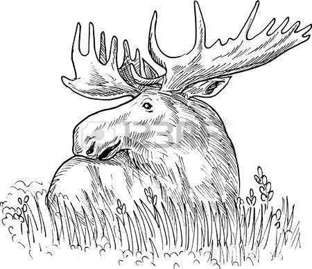 Hand Sketched Drawing Illustration Of A Moose Or Common European Elk Drawing Drawing Illustration Moose Pictures