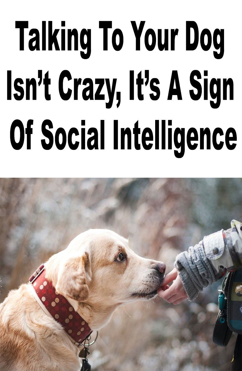 Talking To Your Dog Isn T Crazy It S A Sign Of Social