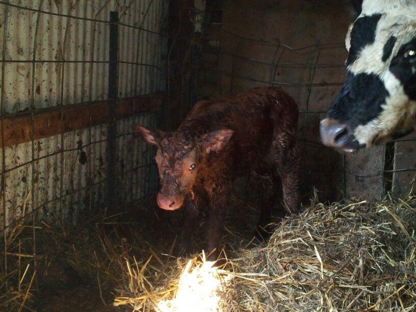 Baby 3 buster born 42813 animals farmer goats