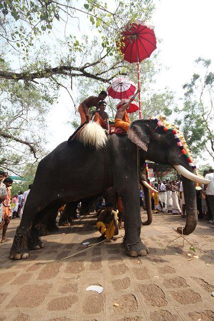 https://flic.kr/p/7Yfm63 | Thrissur Pooram 2010