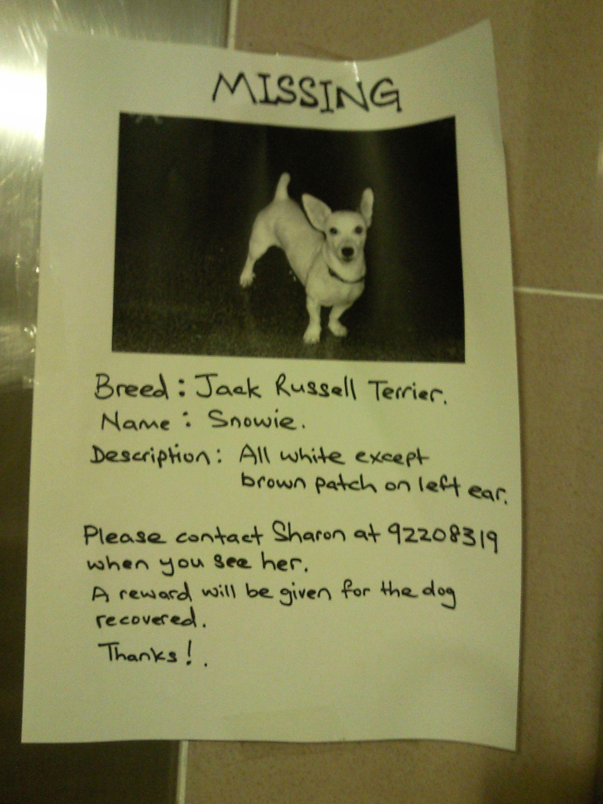 Lost Dog Poster WwwSingaporelostandfoundBlogspotCom  Lost