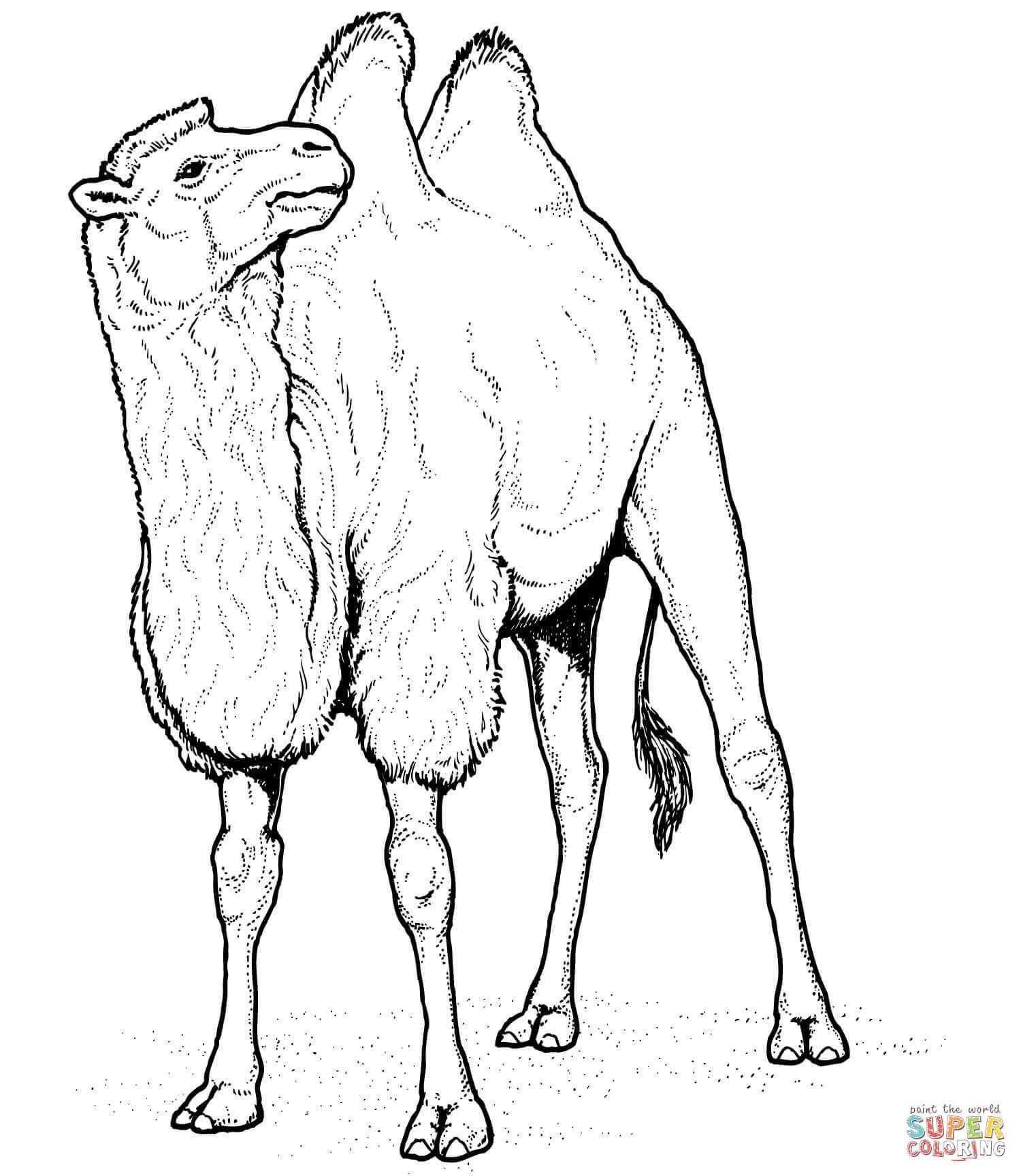 Camello, Camélido de Dos Jorobas | Super Coloring | animales | Pinterest