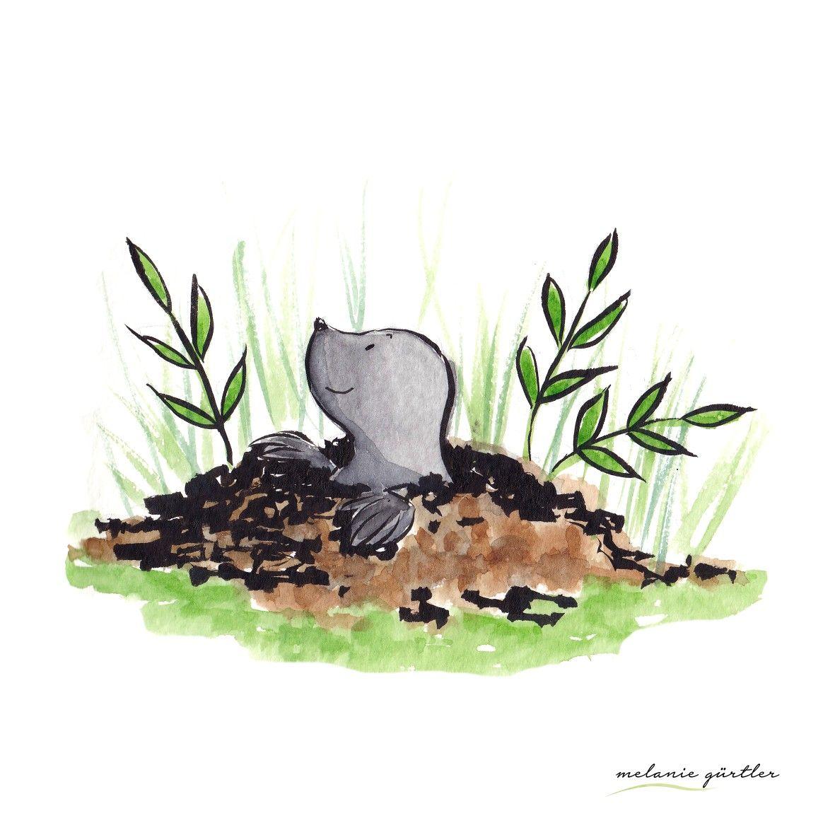 Maulwurf Kinderbuch Illustration Aquarell Melanie Gurtler