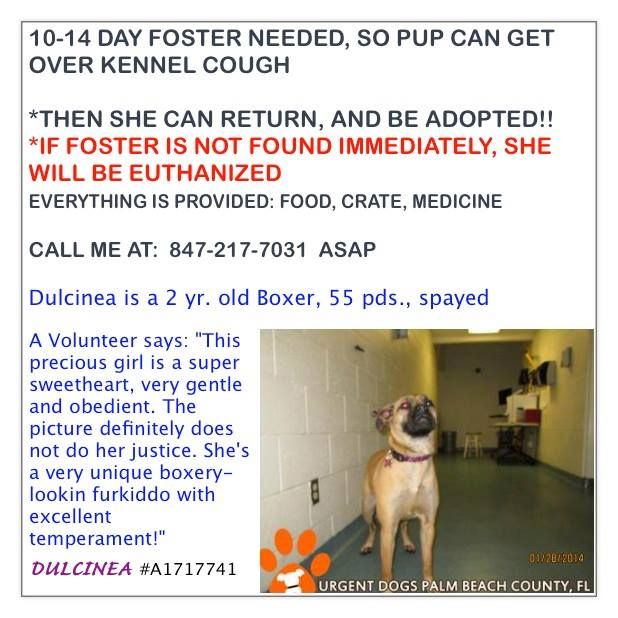 Palm Beach County Animal Care Control Very Temporary Foster