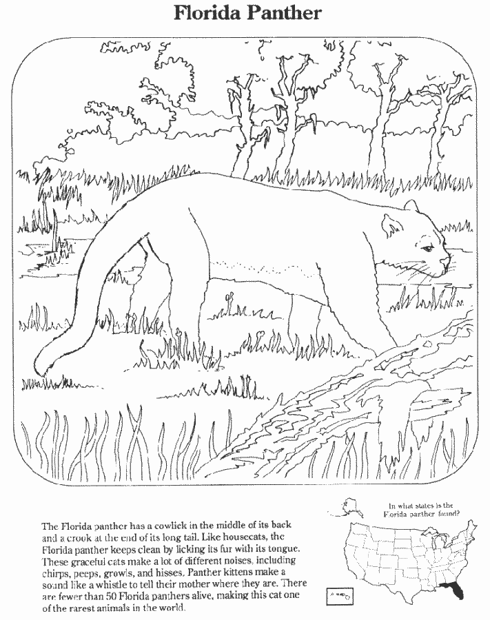 Animal Coloring Book Free Printable Animals Coloring Pages For
