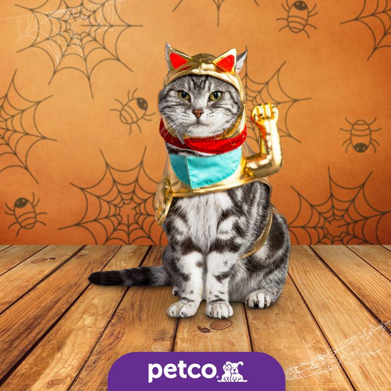Disfraz Gato De La Suerte Disfraz De Gato Gato De La Suerte Gatos