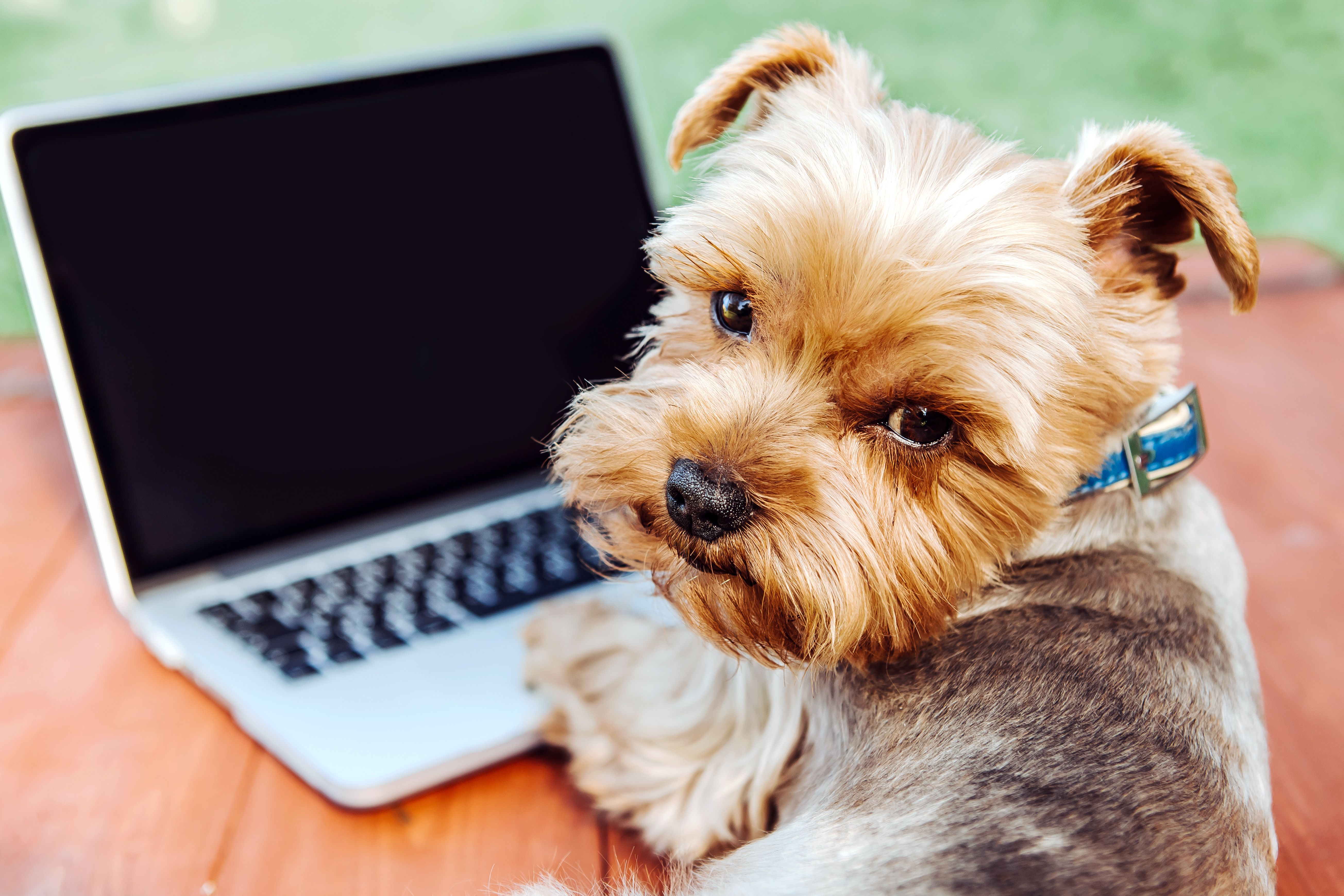 Pin by Dogs Album on Yorkshire Terrier 2 Funny dog