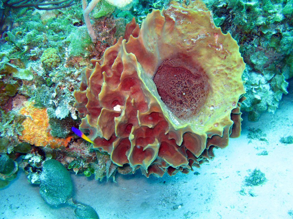 Image result for coral and sponges