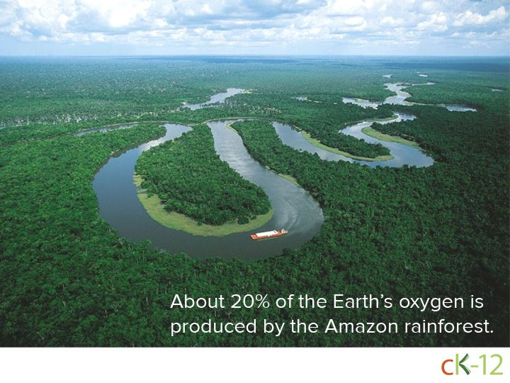 About 20 Of The Earth S Oxygen Is Produced By The Amazon