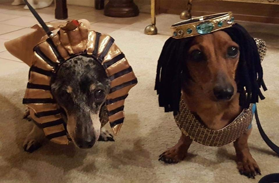 Pin By Stefie Kretz On I Love Doxies Dachshund Lovers Dog Costumes Dachshund