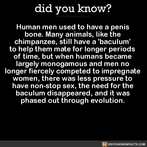 fun facts about penis