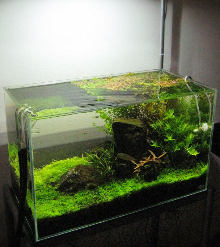 Cute 20 Gallon Long Aquarium